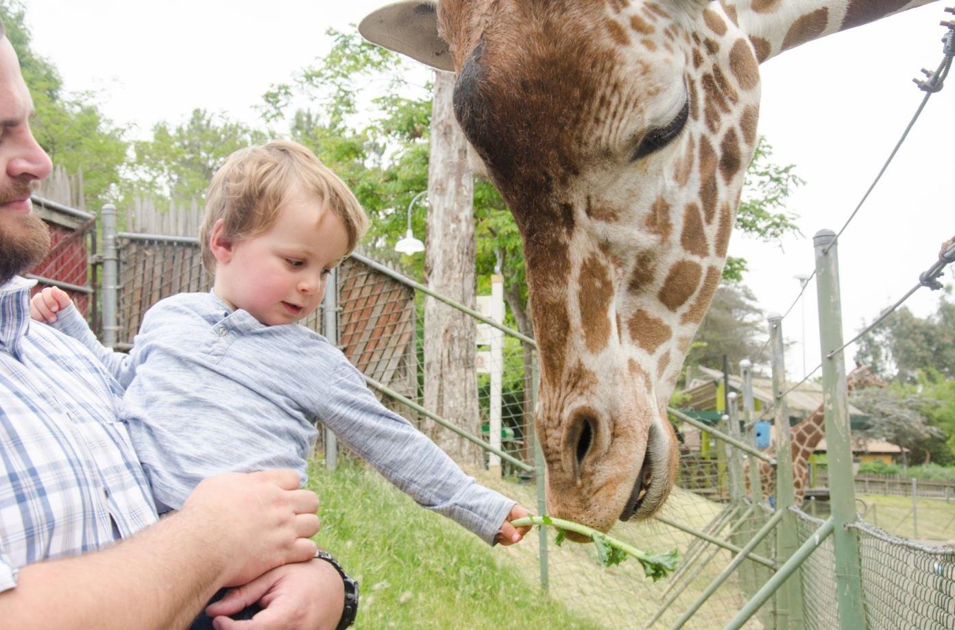 Child with giraffe