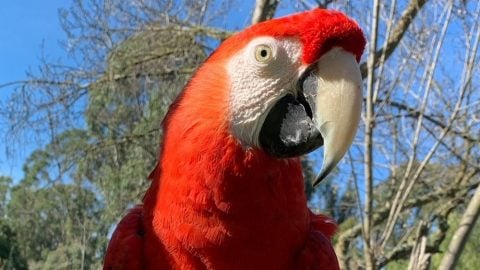 A red parrot at Six Flags