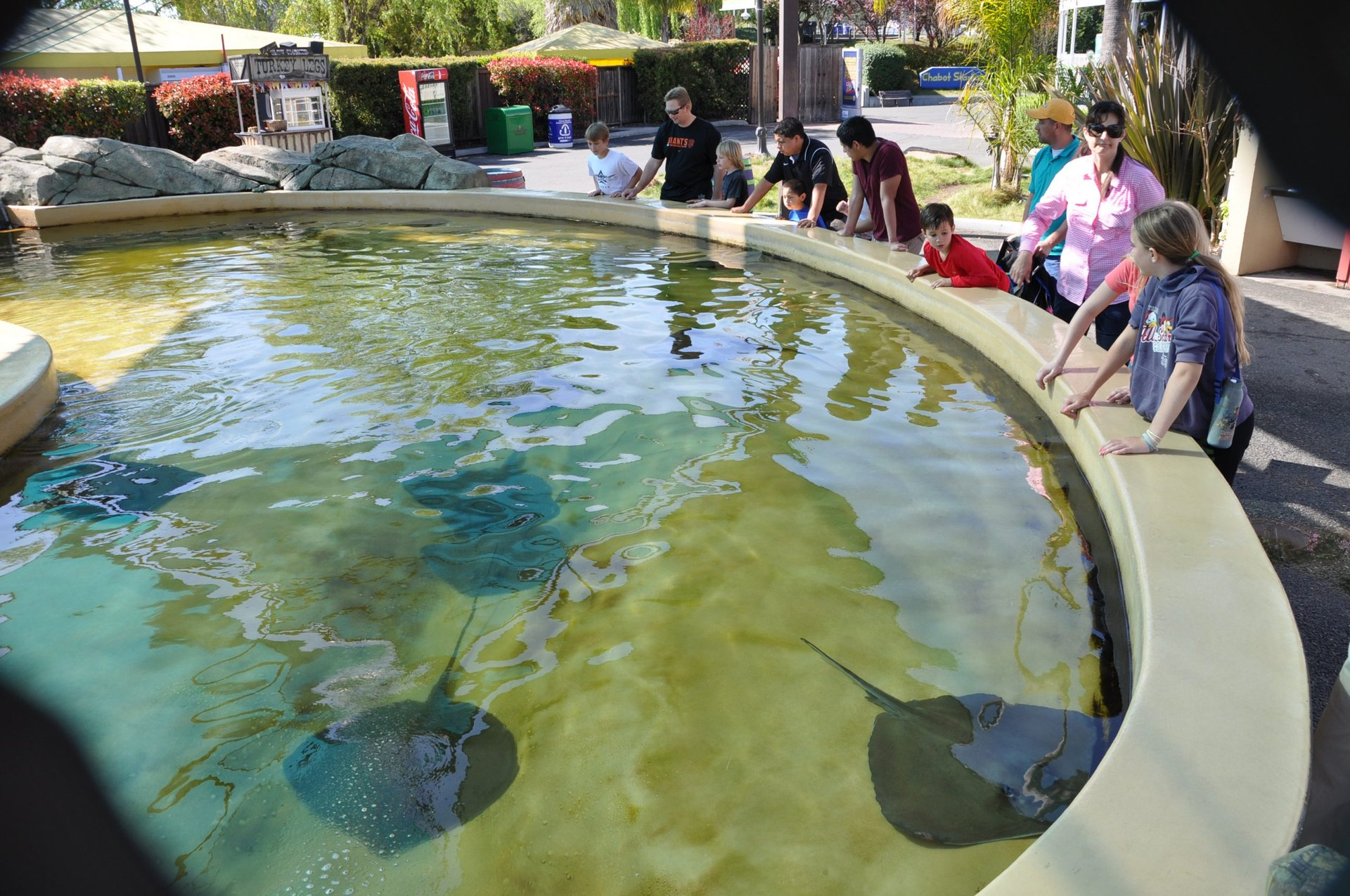 guests looking into Stingray Bay at Six Flags